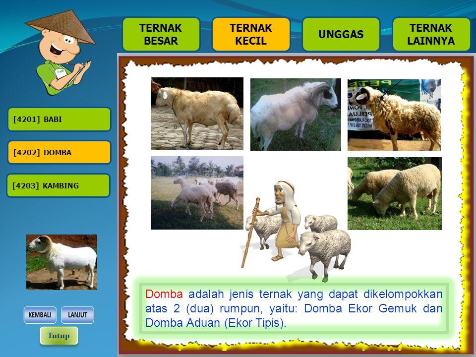 TERNAK BESAR TERNAK KECIL TERNAK LAINNYA UNGGAS [4201] BABI [4202] DOMBA [4203] KAMBING Domba adalah jenis ternak yang dapat dikelompokkan atas 2 (dua) rumpun, yaitu: Domba Ekor Gemuk dan Domba Aduan (Ekor Tipis).