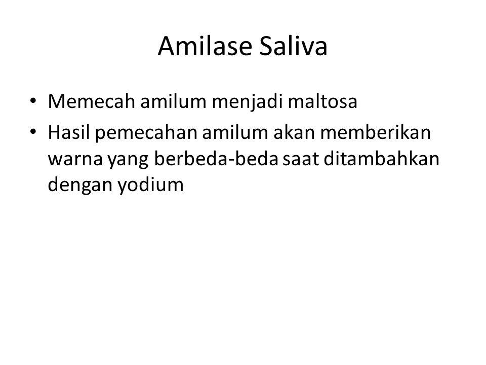 Amilase Saliva Memecah amilum menjadi maltosa Hasil pemecahan amilum akan memberikan warna yang berbeda-beda saat ditambahkan dengan yodium