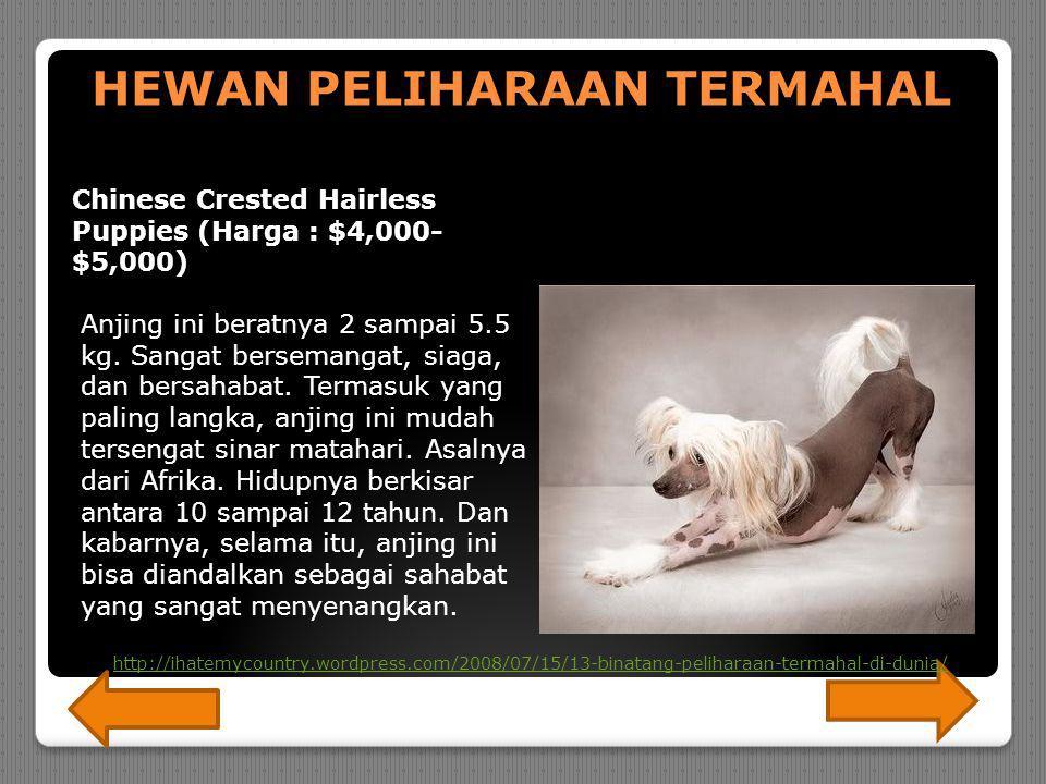 Hyacinth Macaw (Harga : $6,500- 12,000) Semua Macaws sangat mahal.