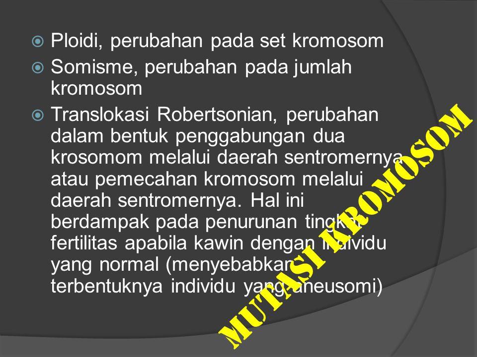  Ploidi, perubahan pada set kromosom  Somisme, perubahan pada jumlah kromosom  Translokasi Robertsonian, perubahan dalam bentuk penggabungan dua kr