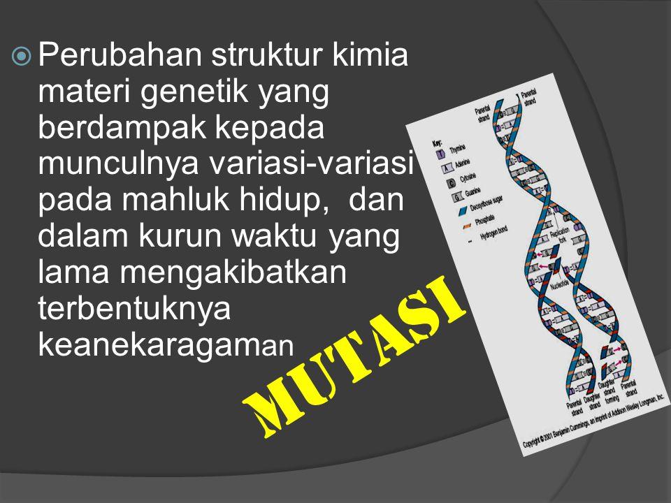 MUTASI  Perubahan struktur kimia materi genetik yang berdampak kepada munculnya variasi-variasi pada mahluk hidup, dan dalam kurun waktu yang lama me