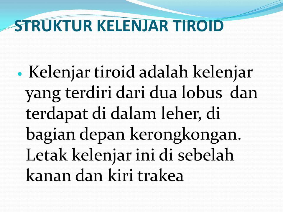 STRUKTUR KELENJAR TIROID Kelenjar tiroid adalah kelenjar yang terdiri dari dua lobus dan terdapat di dalam leher, di bagian depan kerongkongan. Letak
