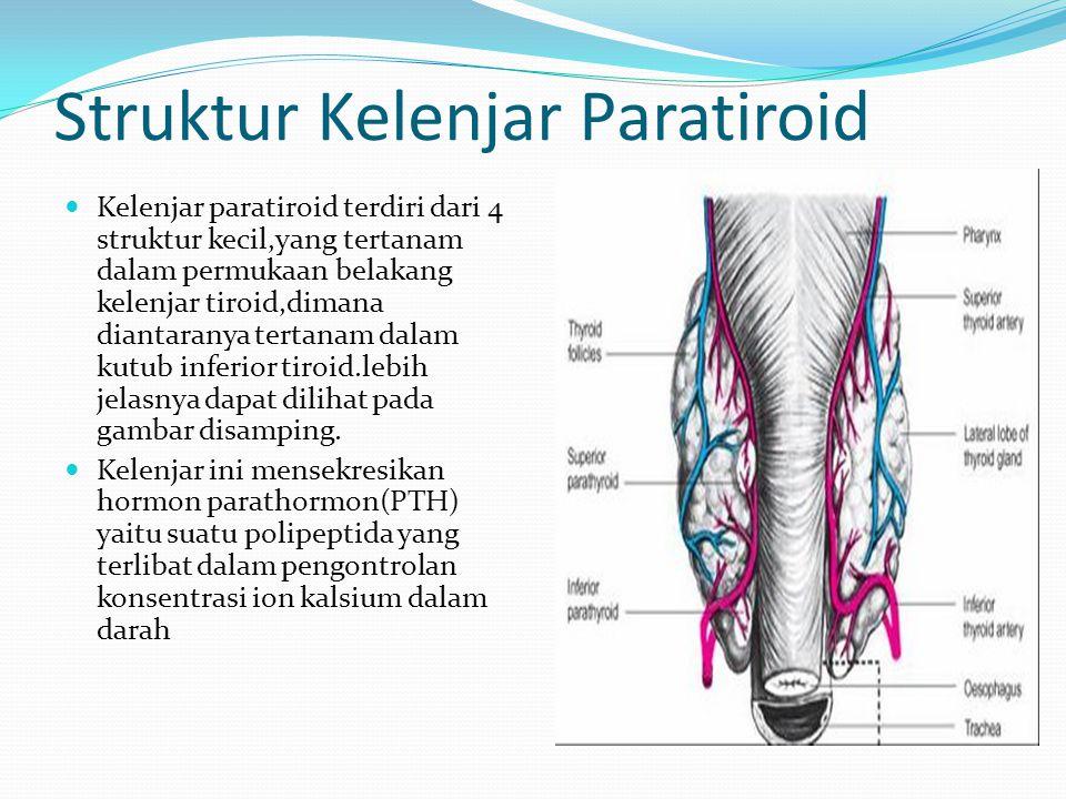 Struktur Kelenjar Paratiroid Kelenjar paratiroid terdiri dari 4 struktur kecil,yang tertanam dalam permukaan belakang kelenjar tiroid,dimana diantaran