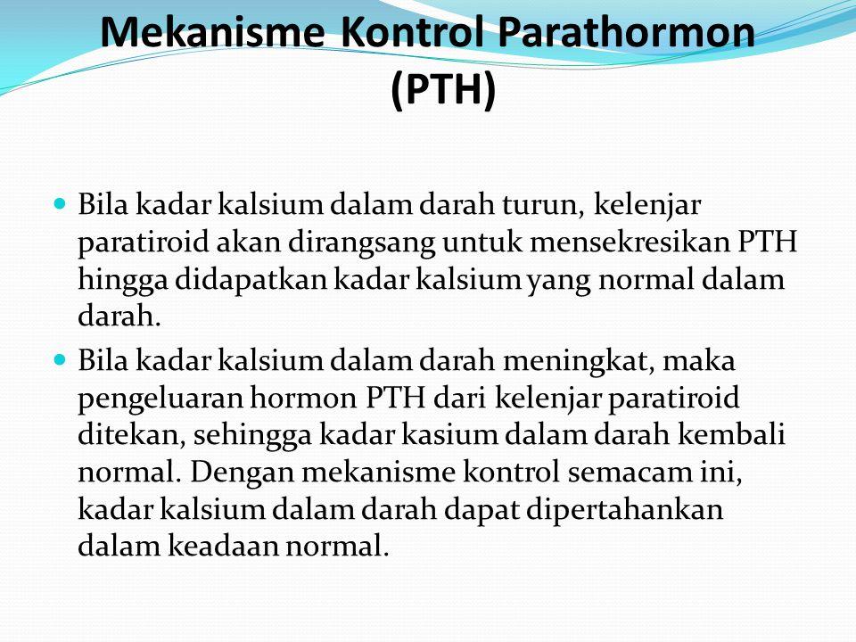 Mekanisme Kontrol Parathormon (PTH) Bila kadar kalsium dalam darah turun, kelenjar paratiroid akan dirangsang untuk mensekresikan PTH hingga didapatka