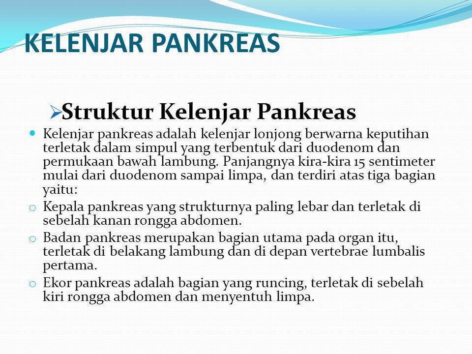 KELENJAR PANKREAS  Struktur Kelenjar Pankreas Kelenjar pankreas adalah kelenjar lonjong berwarna keputihan terletak dalam simpul yang terbentuk dari