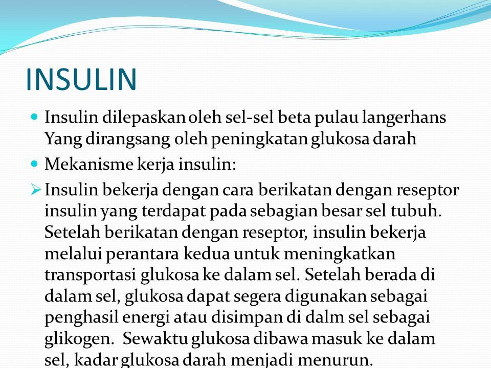 INSULIN Insulin dilepaskan oleh sel-sel beta pulau langerhans Yang dirangsang oleh peningkatan glukosa darah Mekanisme kerja insulin:  Insulin bekerj