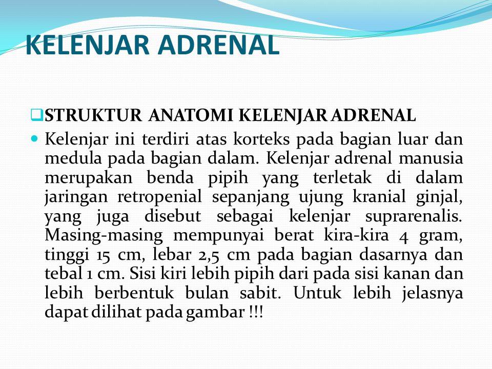 KELENJAR ADRENAL  STRUKTUR ANATOMI KELENJAR ADRENAL Kelenjar ini terdiri atas korteks pada bagian luar dan medula pada bagian dalam. Kelenjar adrenal