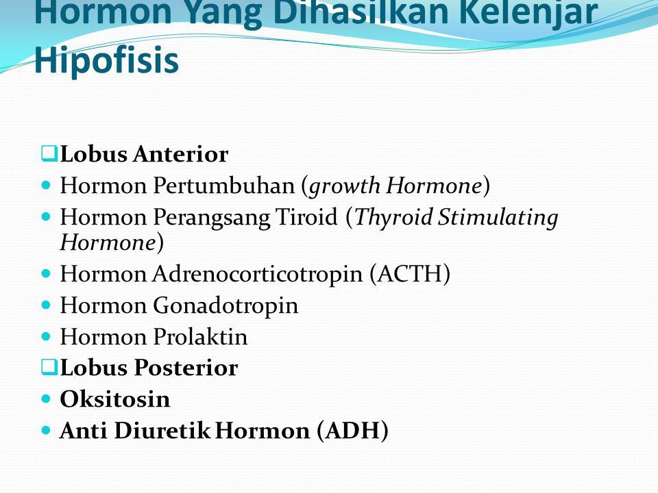 Hormon Yang Dihasilkan Kelenjar Hipofisis  Lobus Anterior Hormon Pertumbuhan (growth Hormone) Hormon Perangsang Tiroid (Thyroid Stimulating Hormone)