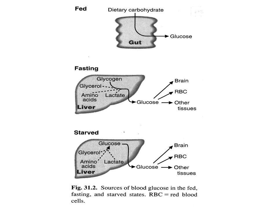 Hormon yg mempengaruhi kadar glukosa darah : I.