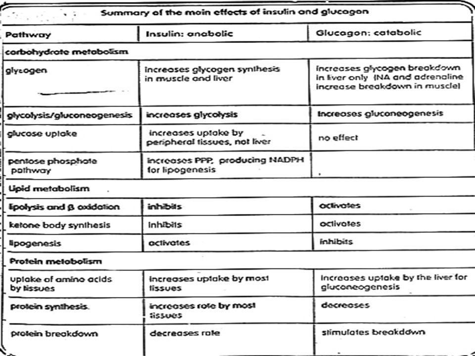 2.Epinefrin (adrenalin) dan norepinefrin - disekresi adrenal bg.