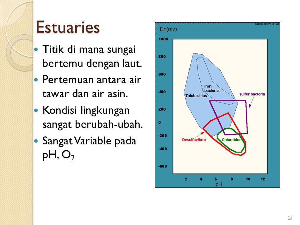 Estuaries Titik di mana sungai bertemu dengan laut. Pertemuan antara air tawar dan air asin. Kondisi lingkungan sangat berubah-ubah. Sangat Variable p