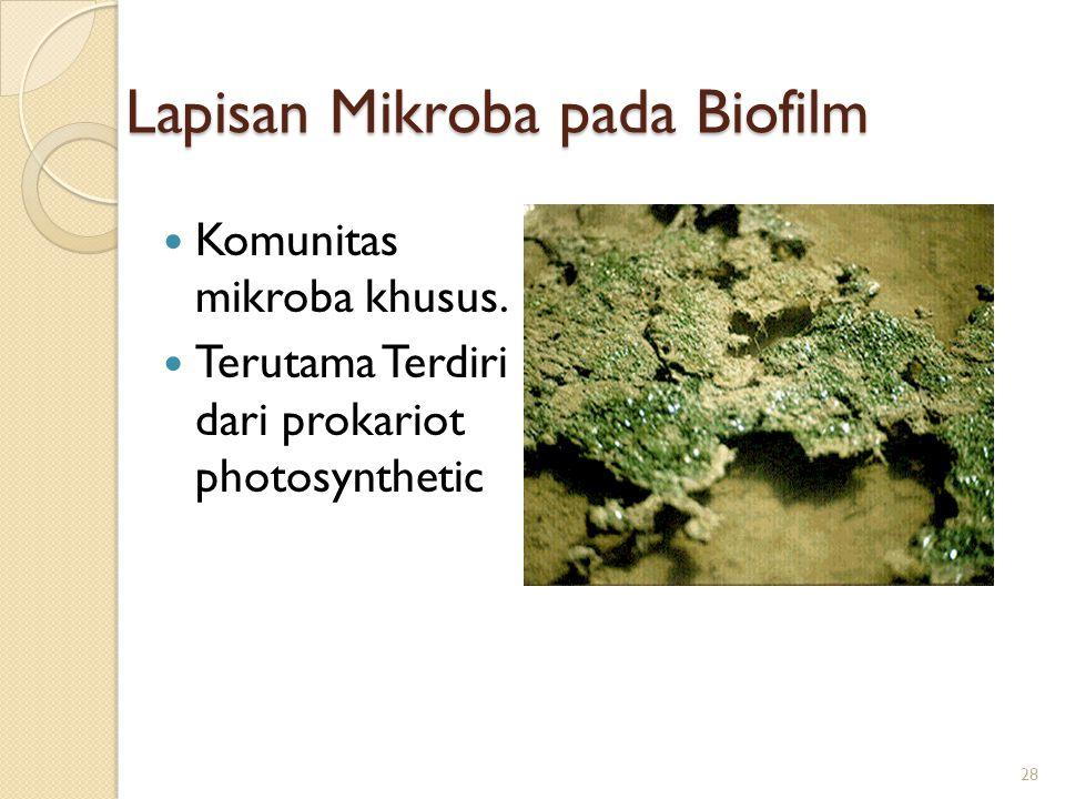 Lapisan Mikroba pada Biofilm Komunitas mikroba khusus. Terutama Terdiri dari prokariot photosynthetic 28