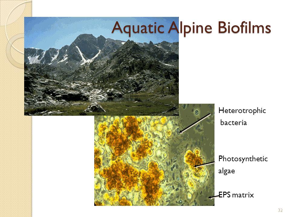 Aquatic Alpine Biofilms Heterotrophic bacteria Photosynthetic algae EPS matrix 32