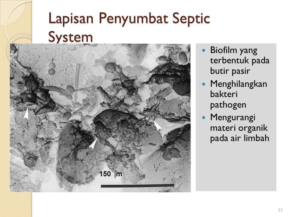 Lapisan Penyumbat Septic System Biofilm yang terbentuk pada butir pasir Menghilangkan bakteri pathogen Mengurangi materi organik pada air limbah 150 