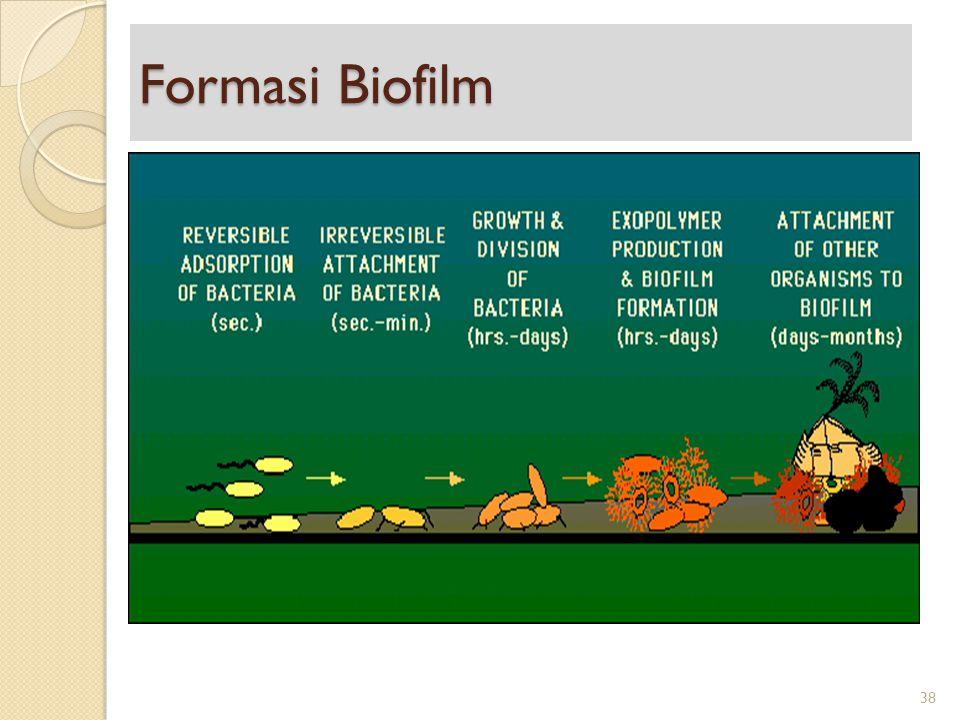 Formasi Biofilm 38