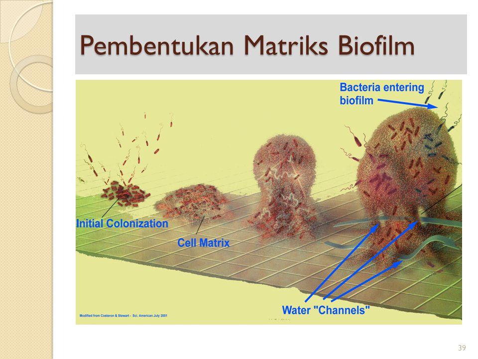 Pembentukan Matriks Biofilm 39