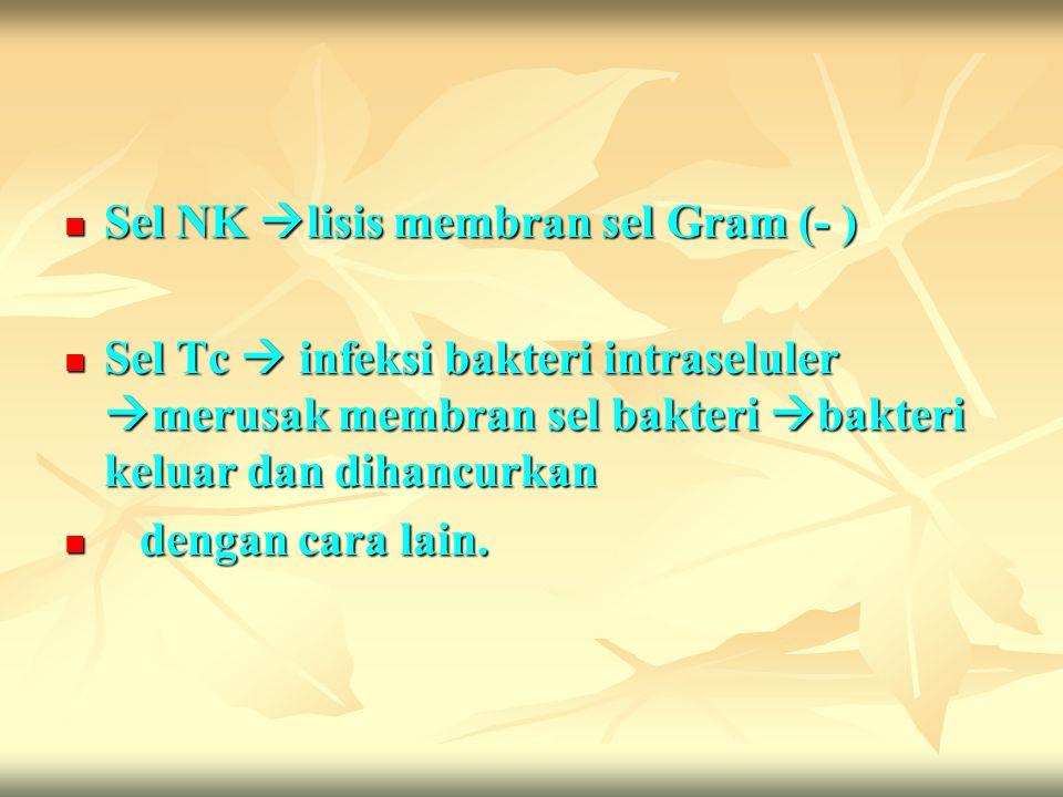 Sel NK  lisis membran sel Gram (- ) Sel NK  lisis membran sel Gram (- ) Sel Tc  infeksi bakteri intraseluler  merusak membran sel bakteri  bakter