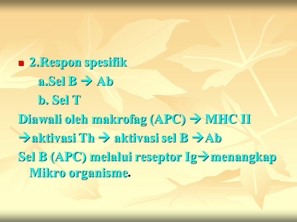 2.Respon spesifik 2.Respon spesifik a.Sel B  Ab a.Sel B  Ab b. Sel T b. Sel T Diawali oleh makrofag (APC)  MHC II  aktivasi Th  aktivasi sel B 