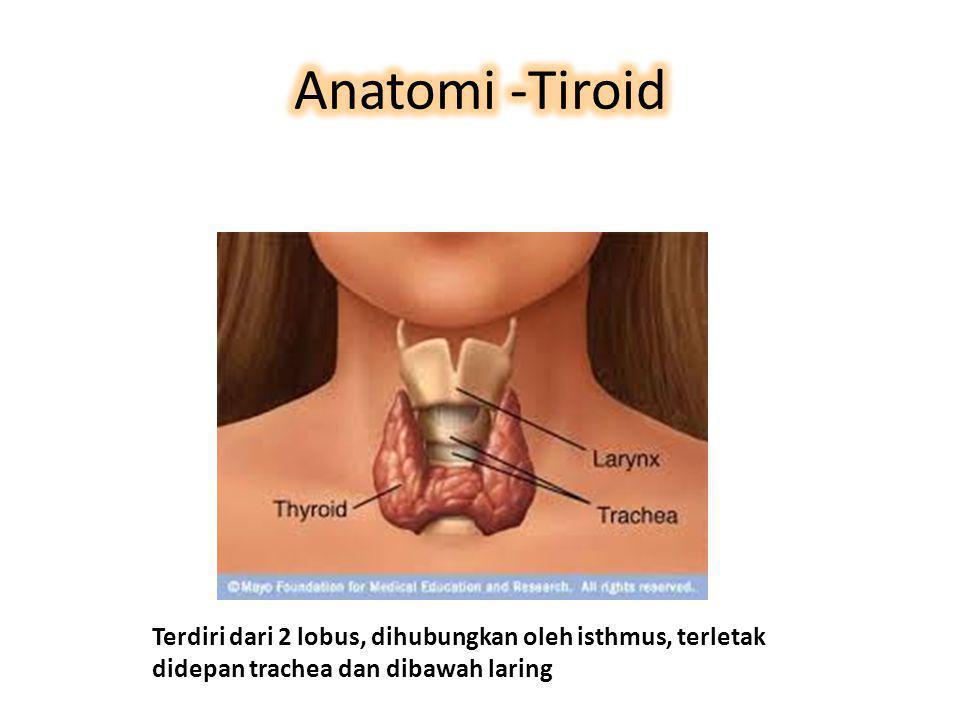Terdiri dari 2 lobus, dihubungkan oleh isthmus, terletak didepan trachea dan dibawah laring