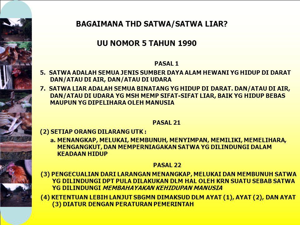 BAGAIMANA THD SATWA/SATWA LIAR.PASAL 1 5.