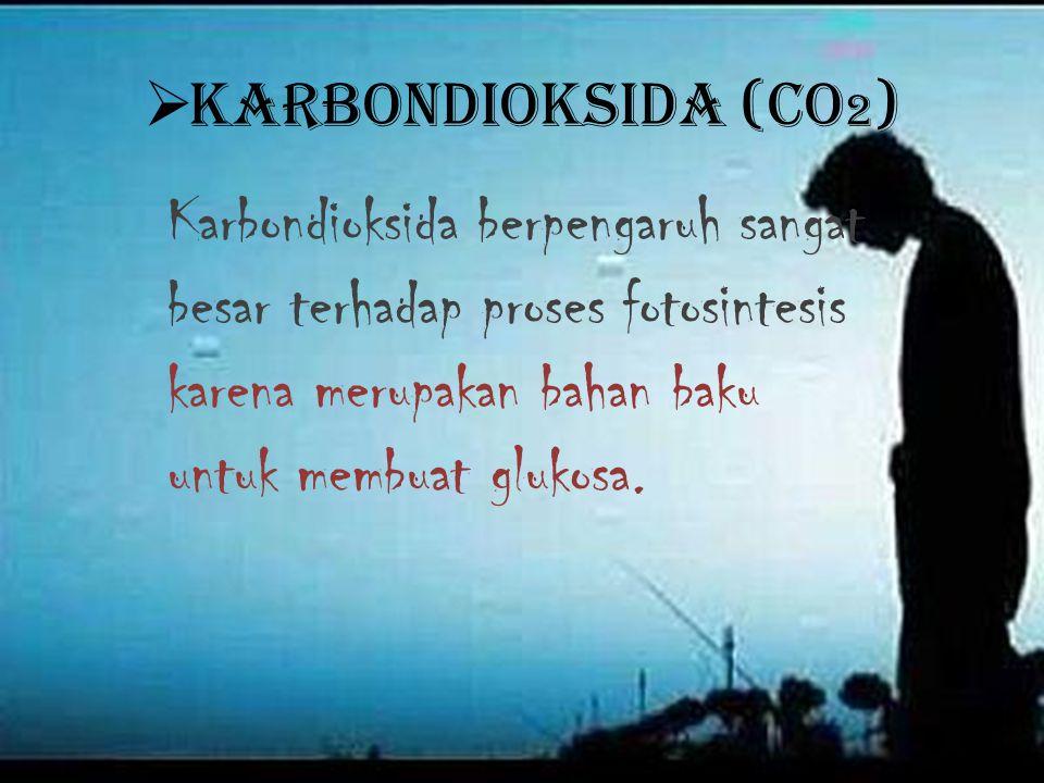  K K arbondioksida (CO 2 ) Karbondioksida berpengaruh sangat besar terhadap proses fotosintesis karena merupakan bahan baku untuk membuat glukosa.