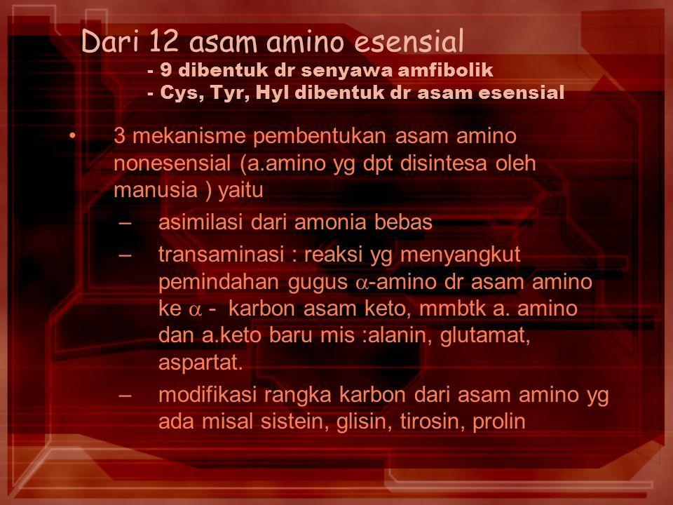 Dari 12 asam amino esensial - 9 dibentuk dr senyawa amfibolik - Cys, Tyr, Hyl dibentuk dr asam esensial 3 mekanisme pembentukan asam amino nonesensial (a.amino yg dpt disintesa oleh manusia ) yaitu –asimilasi dari amonia bebas –transaminasi : reaksi yg menyangkut pemindahan gugus  -amino dr asam amino ke  - karbon asam keto, mmbtk a.