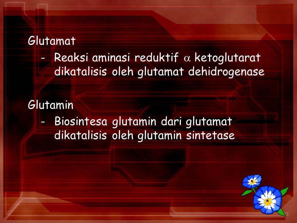 Glutamat -Reaksi aminasi reduktif  ketoglutarat dikatalisis oleh glutamat dehidrogenase Glutamin -Biosintesa glutamin dari glutamat dikatalisis oleh glutamin sintetase