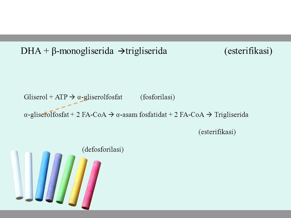 DHA + β-monogliserida  trigliserida(esterifikasi) Gliserol + ATP  α-gliserolfosfat (fosforilasi) α-gliserolfosfat + 2 FA-CoA  α-asam fosfatidat + 2