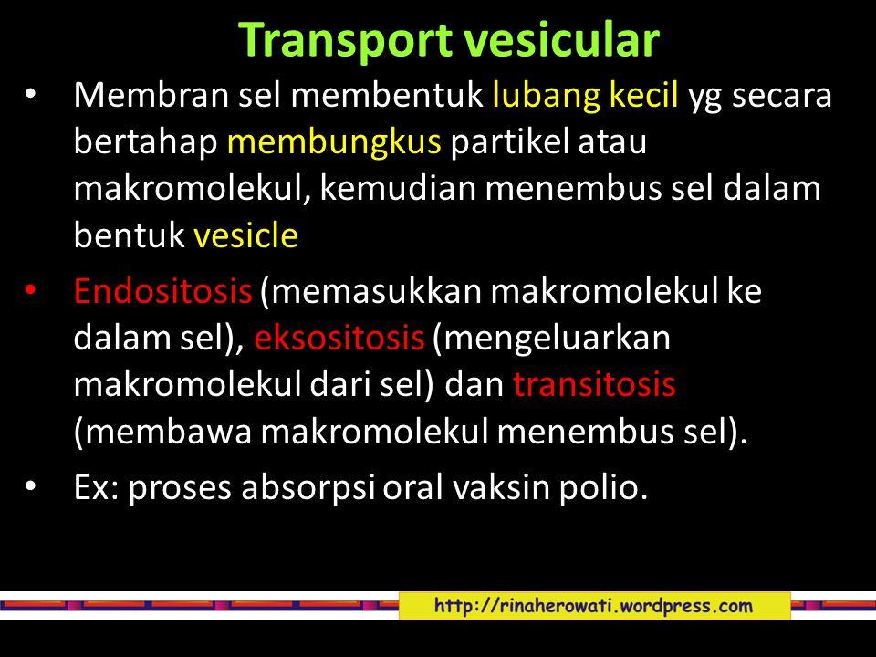 Transport vesicular Membran sel membentuk lubang kecil yg secara bertahap membungkus partikel atau makromolekul, kemudian menembus sel dalam bentuk ve