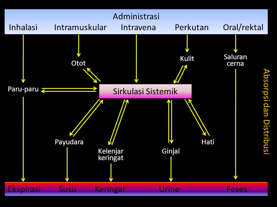 Sifat fisikokimia obat: Ukuran molekul Ion kecil < 50 Da memasuki sel melalui kanal aqueous, sedangkan ion besar terhalang, kecuali difasilitasi oleh sistem transport aktif.