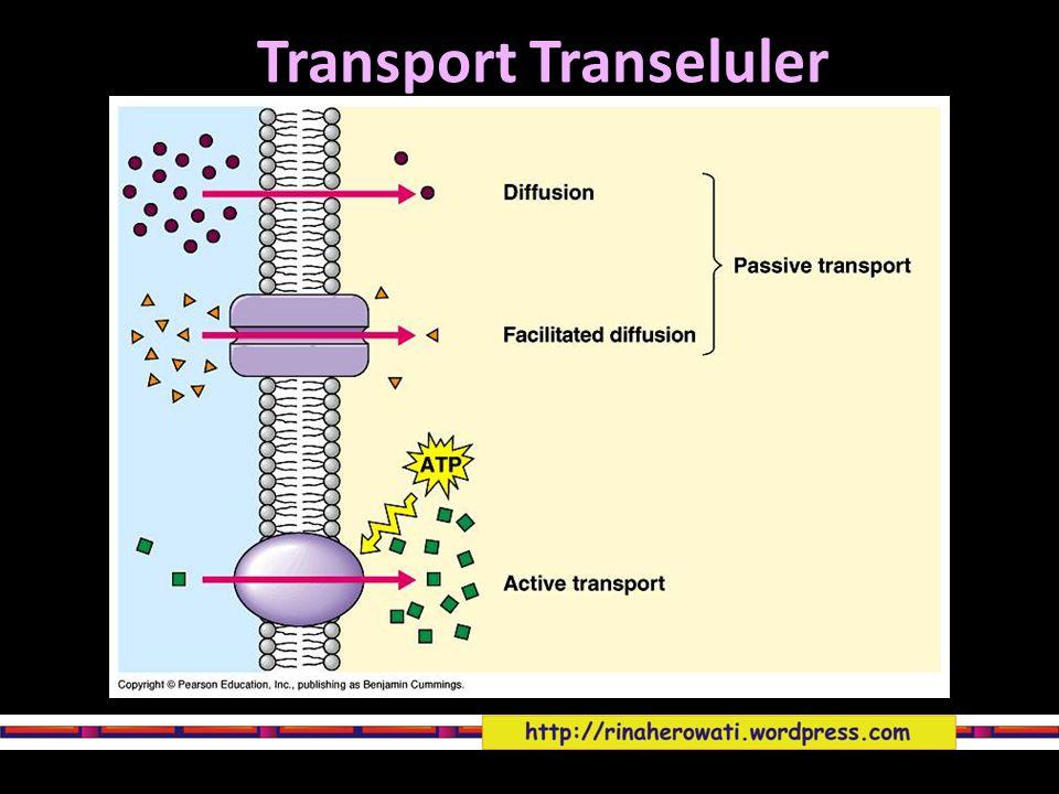 Difusi pasif Merupakan proses dimana molekul secara spontan berdifusi dari daerah berkonsentrasi tinggi ke daerah dgn konsentrasi lebih rendah.