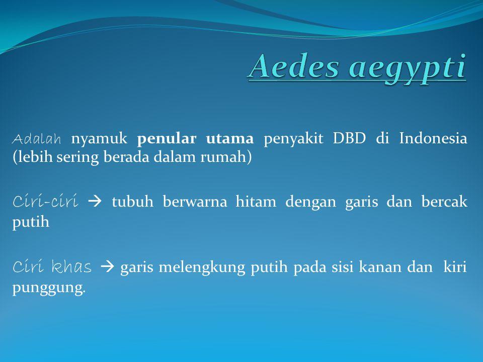 Adalah nyamuk penular utama penyakit DBD di Indonesia (lebih sering berada dalam rumah) Ciri-ciri  tubuh berwarna hitam dengan garis dan bercak putih
