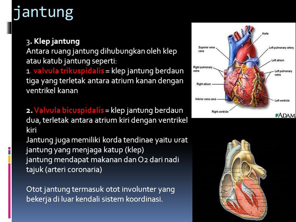 jantung 3.Klep jantung Antara ruang jantung dihubungkan oleh klep atau katub jantung seperti: 1.