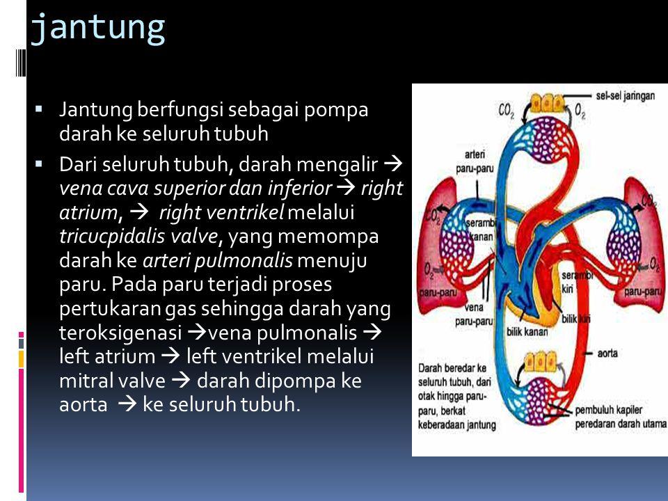 Pembuluh darah  Pembuluh darah merupakan keseluruhan sistem peredaran (sistem kardiovaskuler) terdiri dari arteri, arteriola, kapiler, venula dan vena.