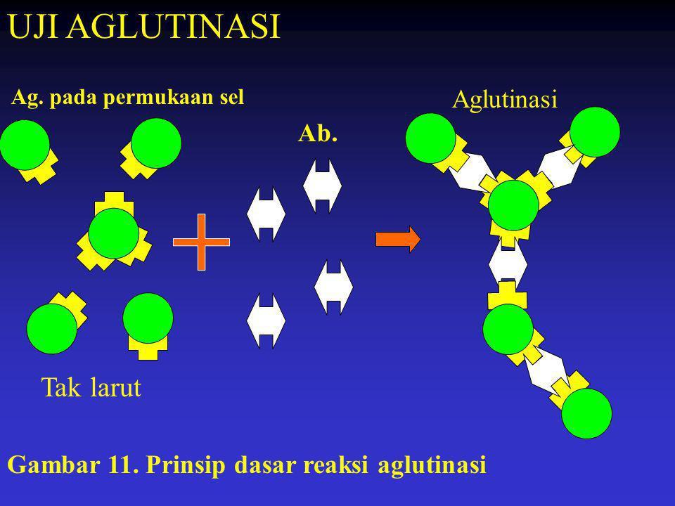 Ag. pada permukaan sel Ab. Aglutinasi Gambar 11. Prinsip dasar reaksi aglutinasi UJI AGLUTINASI Tak larut