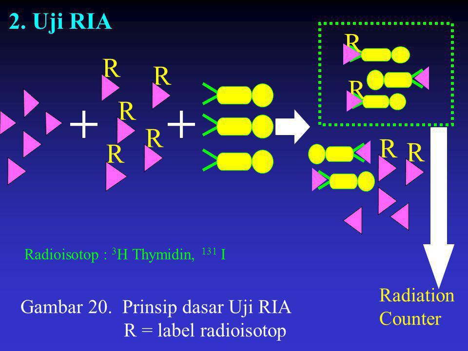Gambar 20. Prinsip dasar Uji RIA R = label radioisotop R R R R R R R R R Radiation Counter 2. Uji RIA Radioisotop : 3 H Thymidin, 131 I