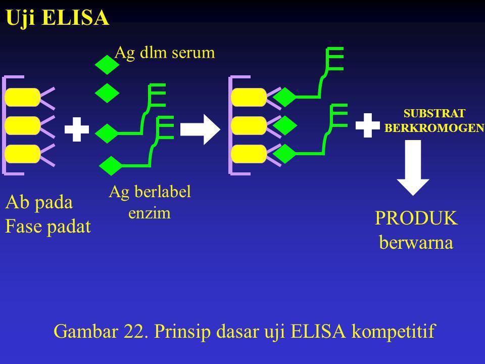 SUBSTRAT BERKROMOGEN PRODUK berwarna Ab pada Fase padat Ag berlabel enzim Gambar 22. Prinsip dasar uji ELISA kompetitif Uji ELISA Ag dlm serum