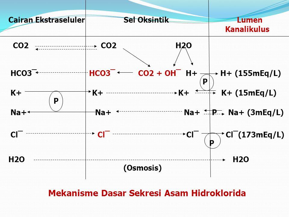 Cairan Ekstraseluler Sel Oksintik Lumen Kanalikulus CO2 CO2 H2O HCO3‾ HCO3‾ CO2 + OH‾ H+ H+ (155mEq/L) P K+ K+ K+ K+ (15mEq/L) P Na+ Na+ Na+ P Na+ (3m