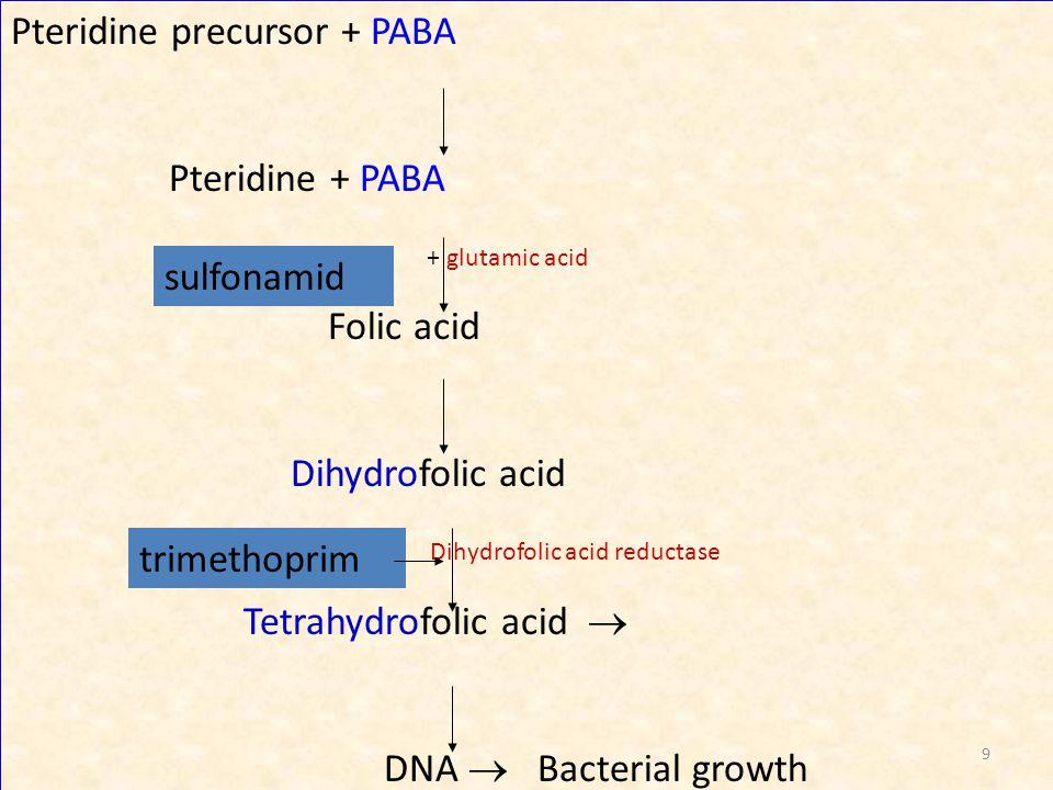 Pteridine precursor + PABA Pteridine + PABA + glutamic acid Folic acid Dihydrofolic acid Dihydrofolic acid reductase Tetrahydrofolic acid  DNA  Bact
