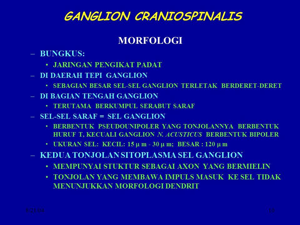 8/21/0410 GANGLION CRANIOSPINALIS MORFOLOGI –BUNGKUS: JARINGAN PENGIKAT PADAT –DI DAERAH TEPI GANGLION SEBAGIAN BESAR SEL-SEL GANGLION TERLETAK BERDER