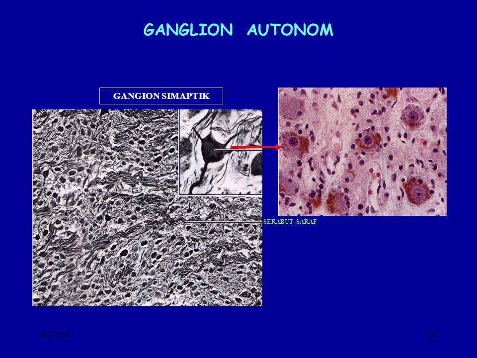 8/21/0414 GANGLION AUTONOM GANGION SIMAPTIK SERABUT SARAF