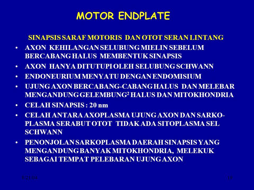 8/21/0419 MOTOR ENDPLATEMOTOR SINAPSIS SARAF MOTORIS DAN OTOT SERAN LINTANG AXON KEHILANGAN SELUBUNG MIELIN SEBELUM BERCABANG HALUS MEMBENTUK SINAPSIS