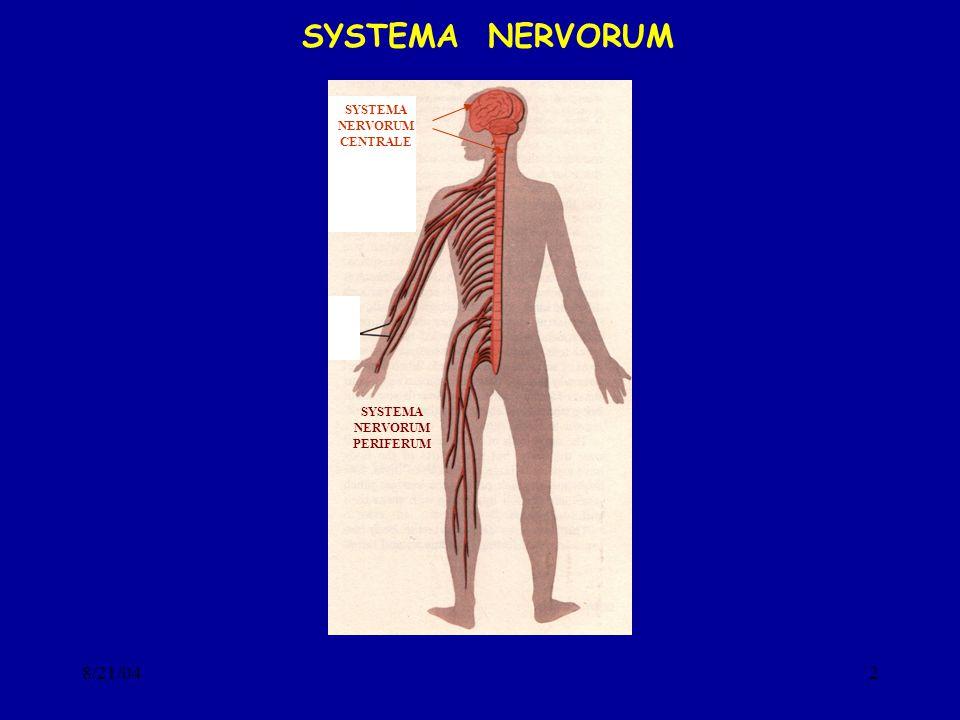 8/21/042 SYSTEMA NERVORUM SYSTEMA NERVORUM CENTRALE SYSTEMA NERVORUM PERIFERUM
