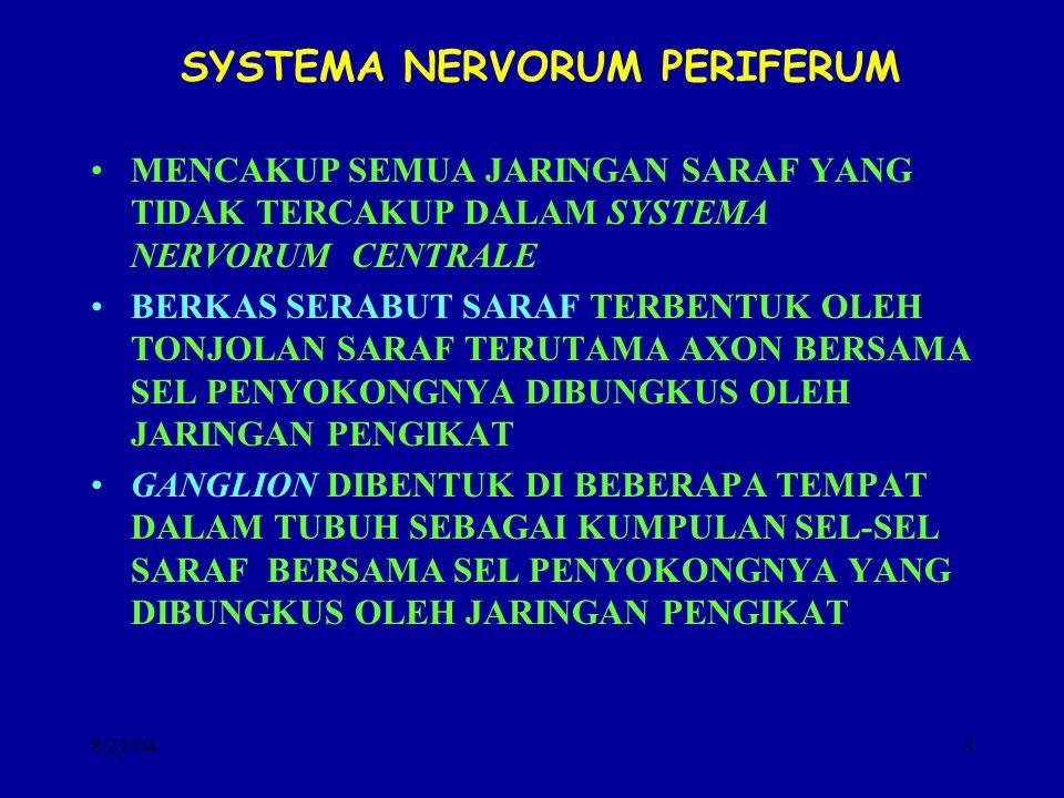 8/21/043 SYSTEMA NERVORUM PERIFERUM MENCAKUP SEMUA JARINGAN SARAF YANG TIDAK TERCAKUP DALAM SYSTEMA NERVORUM CENTRALE BERKAS SERABUT SARAF TERBENTUK O