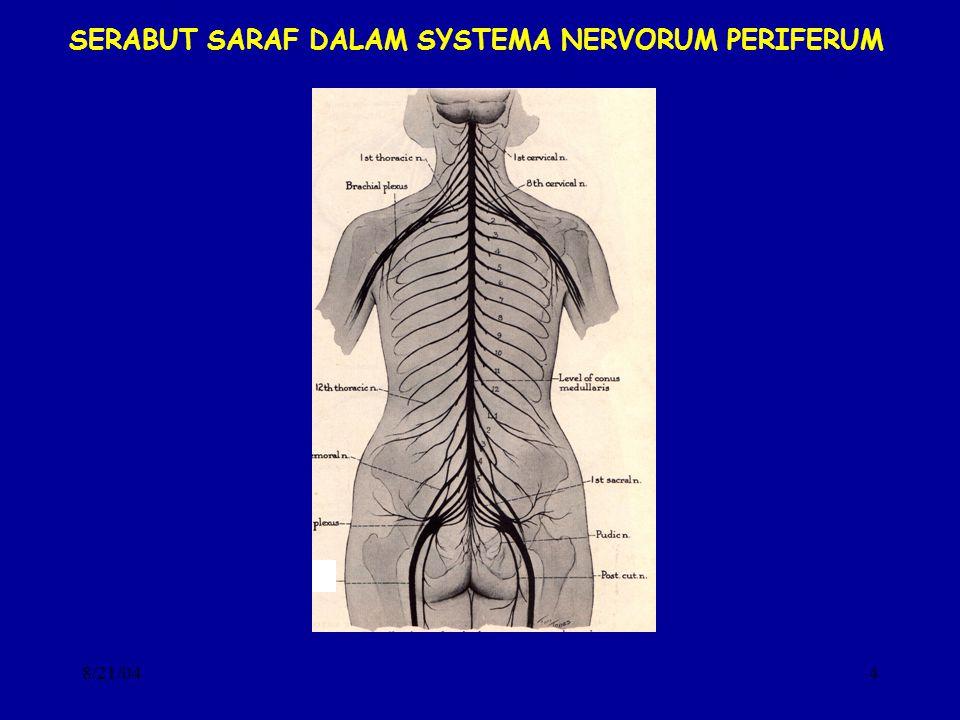 8/21/044 SERABUT SARAF DALAM SYSTEMA NERVORUM PERIFERUM
