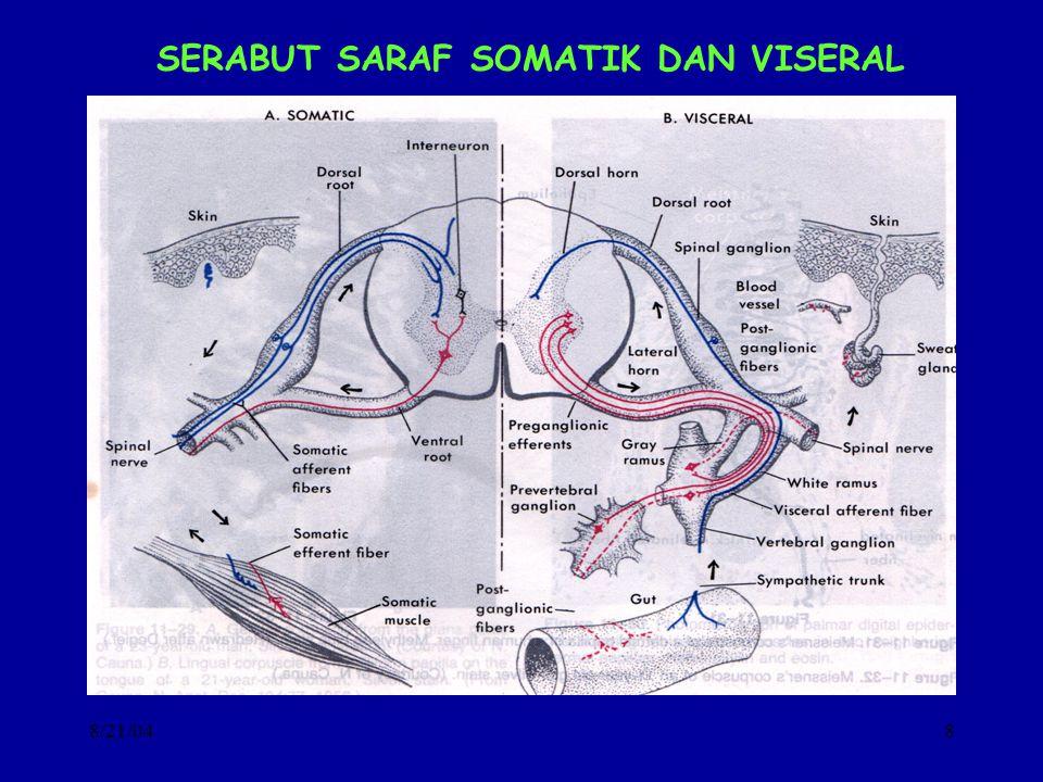 8/21/048 SERABUT SARAF SOMATIK DAN VISERAL