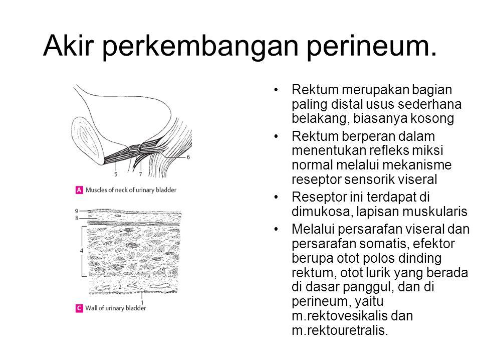Akir perkembangan perineum. Rektum merupakan bagian paling distal usus sederhana belakang, biasanya kosong Rektum berperan dalam menentukan refleks mi