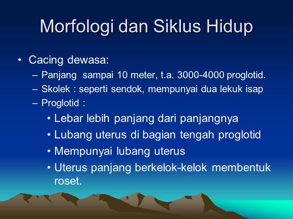Morfologi dan Siklus Hidup Cacing dewasa: –Panjang sampai 10 meter, t.a. 3000-4000 proglotid. –Skolek : seperti sendok, mempunyai dua lekuk isap –Prog