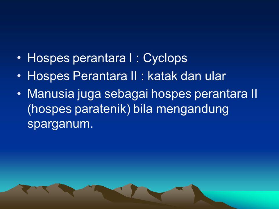 Hospes perantara I : Cyclops Hospes Perantara II : katak dan ular Manusia juga sebagai hospes perantara II (hospes paratenik) bila mengandung sparganu