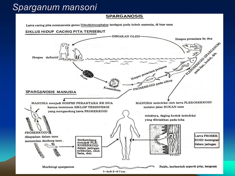 Sparganum mansoni